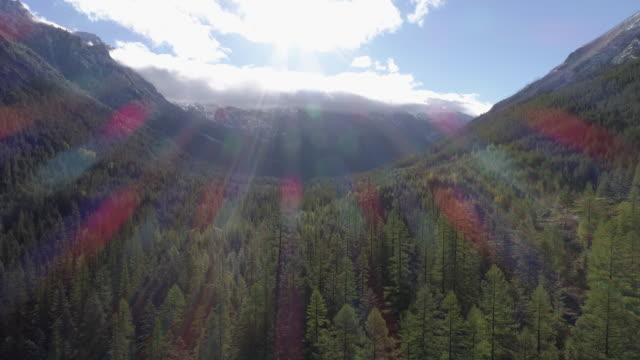 aerial view of sun shining on a forest - biological process stock videos & royalty-free footage