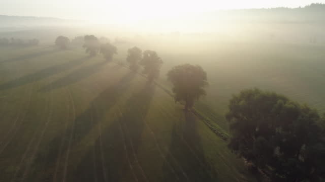 aerial view of sunrise over foggy landscape with a row of trees. franconia, bavaria, germany. - spiritualität stock-videos und b-roll-filmmaterial