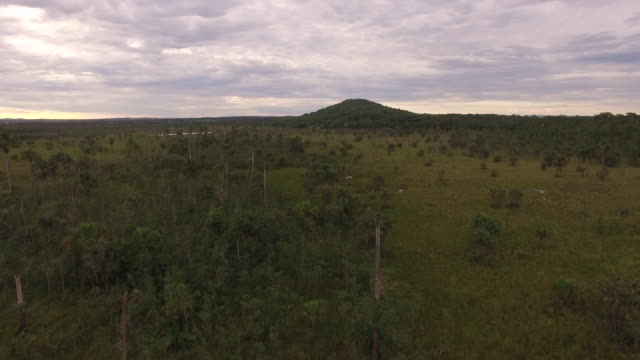 aerial view of swamp with trees and farmland at sunset - cerrado stock videos & royalty-free footage