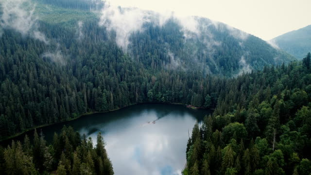 aerial view of synevir lake in the  carpathian mountains in ukraine - pine tree stock videos & royalty-free footage