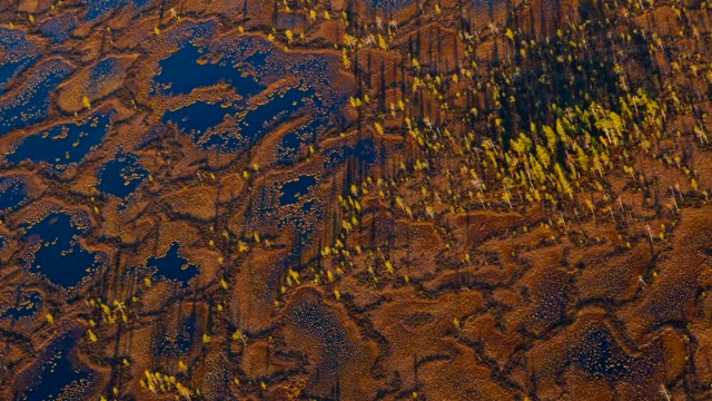 aerial view of taiga forest and peatland in autumn - finnland stock-videos und b-roll-filmmaterial