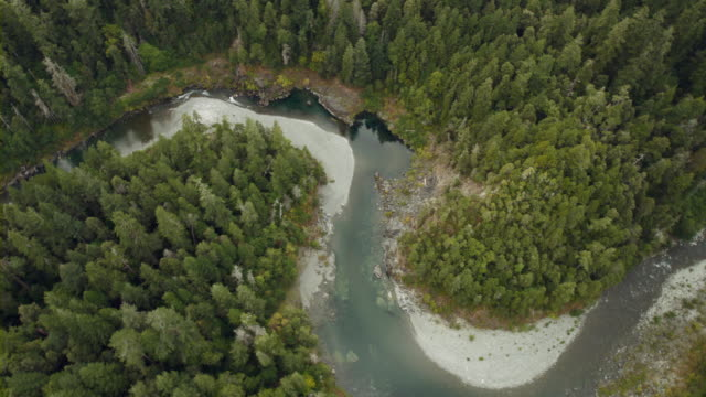 aerial view of tall california redwoods growing along a bend of the south fork smith river. - northern california stock videos & royalty-free footage