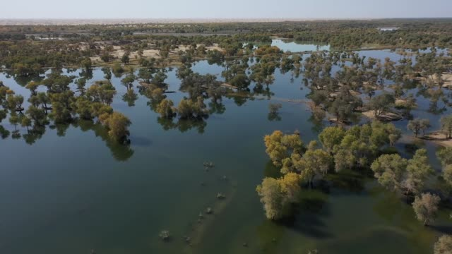 aerial view of tarim river wetland on july 9 2019 in sinkiang china - beauty stock videos & royalty-free footage