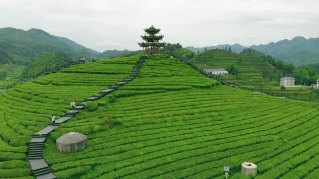 aerial view of tea farm with chinese traditional pavilion - pavilion stock videos & royalty-free footage