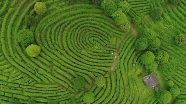 aerial view of tea fields in china, drone moving up - lush stock videos & royalty-free footage