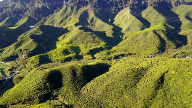 Luftaufnahme der Teeplantage Cameron Highland am Morgen, Bundesstaat Pahang, Malaysia
