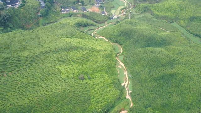 Aerial view of Tea plantation Cameron Highland at morning, Pahang State, Malaysia