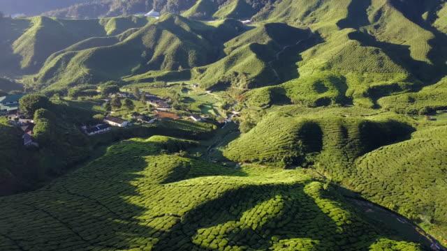 Luftaufnahme der Teeplantage Cameron Highland Staat Pahang, Malaysia