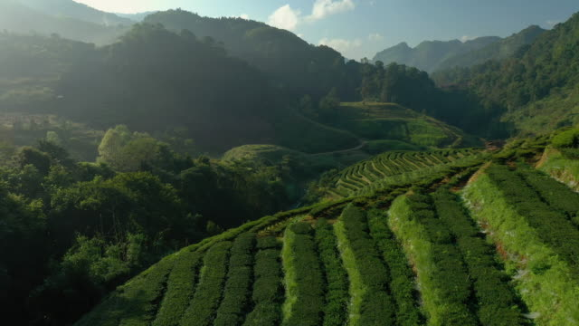 aerial view of tea plantation terrace on mountain - plantation stock videos & royalty-free footage