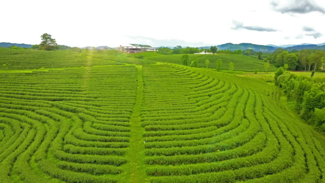 aerial view of tea plantation terrace on mountain. - sri lanka stock videos and b-roll footage
