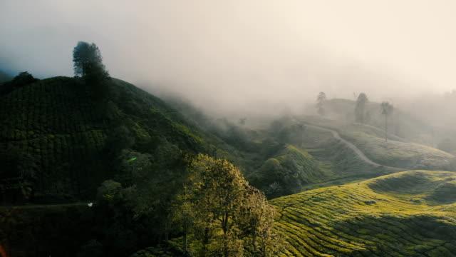 茶畑の日の出の空撮 - スリランカ点の映像素材/bロール