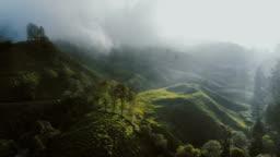 Aerial view of tea plantations at sunrise