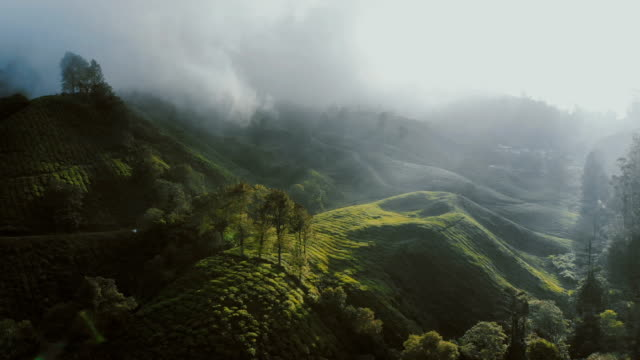 Aerial view of tea plantations at sunrise