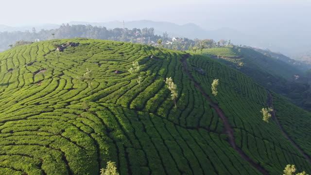 aerial view of tea plantations in munnar, kerala - tè bevanda calda video stock e b–roll
