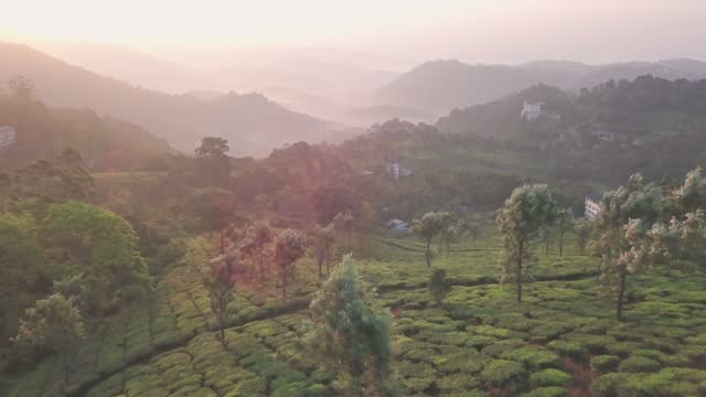 aerial view of tea plantations in the hills, at sunrise, kerala, india - tradition stock videos & royalty-free footage