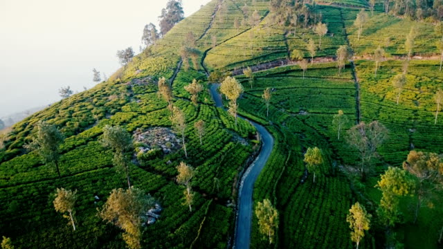 luftaufnahme der teeplantagen - westbengalen stock-videos und b-roll-filmmaterial