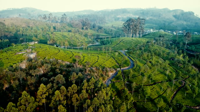 aerial view of tea plantations - sri lanka stock videos and b-roll footage