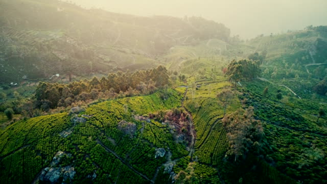 aerial view of tea plantations - twilight stock videos & royalty-free footage