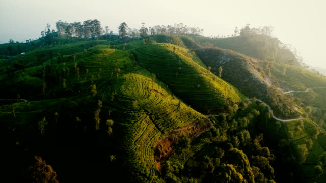 aerial view of tea plantations - india video stock e b–roll