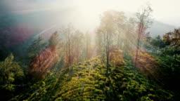 Aerial view of tea plantations