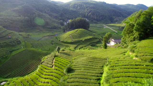 aerial view of tea plantations,hubei,china. - tea crop stock videos & royalty-free footage