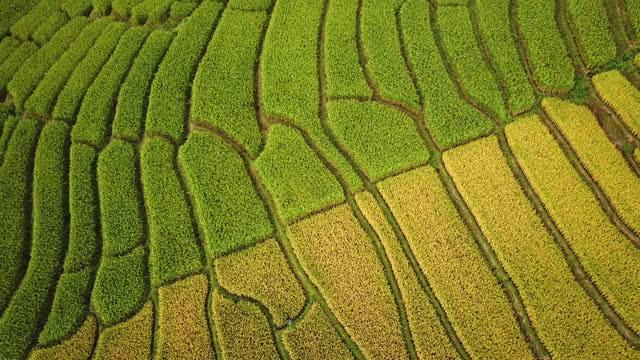 luftaufnahme von terrasse reisfeld landwirtschaft von südostasiatischen - terrasse grundstück stock-videos und b-roll-filmmaterial
