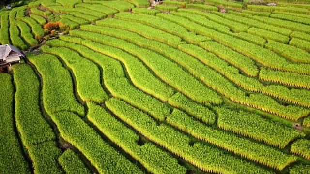 luftaufnahme von terrasse reis eingereicht landwirtschaft von südostasien in grüner jahreszeit - terrasse grundstück stock-videos und b-roll-filmmaterial
