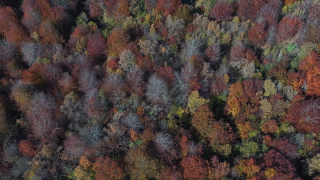 aerial view of the autumn landscape in san pedro de soba, soba valley, valles pasiegos, cantabria, spain - soba stock videos & royalty-free footage