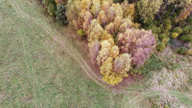 vídeos de stock e filmes b-roll de aerial view of the autumnal forest. pines and maples - árvore de folha caduca
