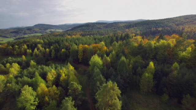 aerial view of the autumnal forest. pines and maples - panoramic stock videos & royalty-free footage