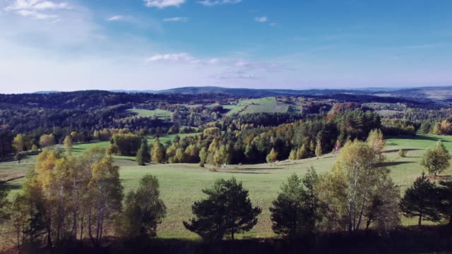 aerial view of the autumnal forest. pines and maples - poland stock videos and b-roll footage