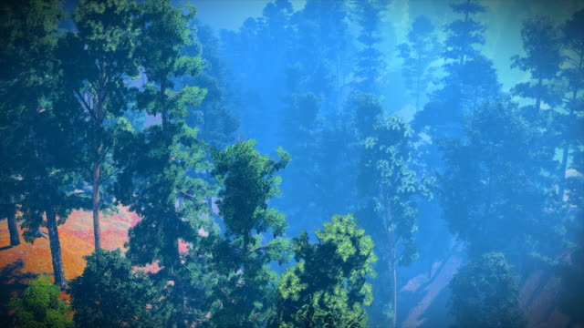 aerial view of the beautiful forest - pinaceae stock videos & royalty-free footage