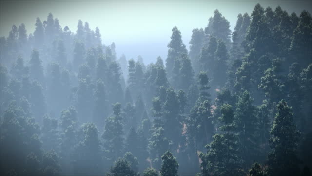 aerial view of the beautiful forest - forestry industry stock videos & royalty-free footage