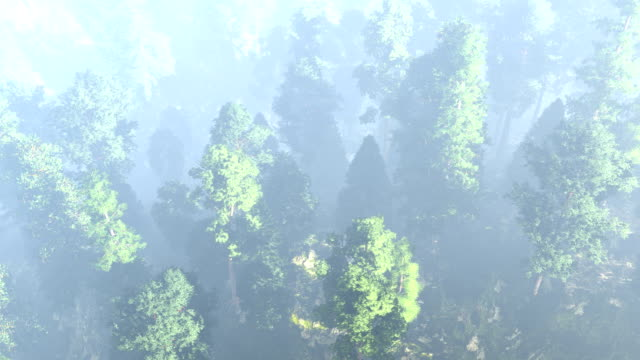 aerial view of the beautiful forest - taiga stock videos and b-roll footage
