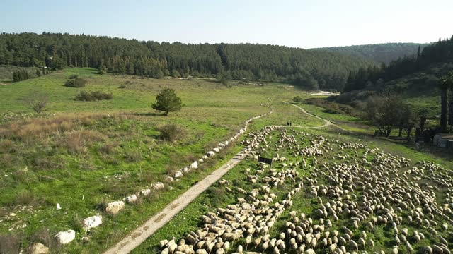 aerial view of the carmel mountains, menashe heights israel - valley stock videos & royalty-free footage