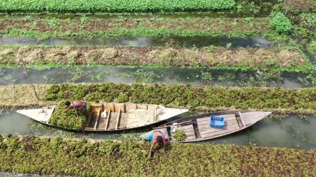 aerial view of the floating garden in bangladesh annual monsoon rainfalls submerge lowland areas for months on end in bangladeshbut in the rural... - small business stock videos & royalty-free footage