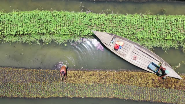 aerial view of the floating garden in bangladesh. annual monsoon rainfalls submerge lowland areas for months on end in bangladesh.but in the rural... - vegetable garden stock videos & royalty-free footage