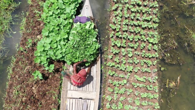 aerial view of the floating garden in bangladesh annual monsoon rainfalls submerge lowland areas for months on end in bangladeshbut in the rural... - vegetable garden stock videos and b-roll footage