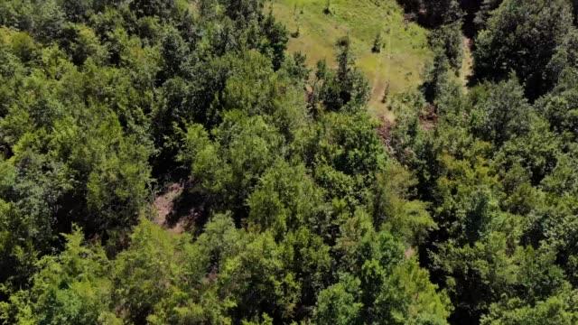 luftaufnahme der wald- und berglandschaft in serbien - grüner wald in den sommermonaten - flugzeug in der luft stock-videos und b-roll-filmmaterial