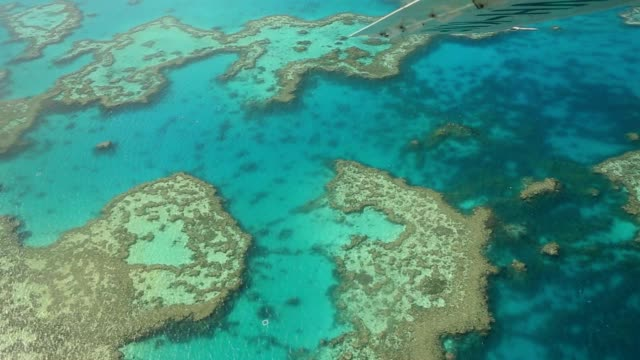 aerial view of the great barrier reef - reef stock videos & royalty-free footage
