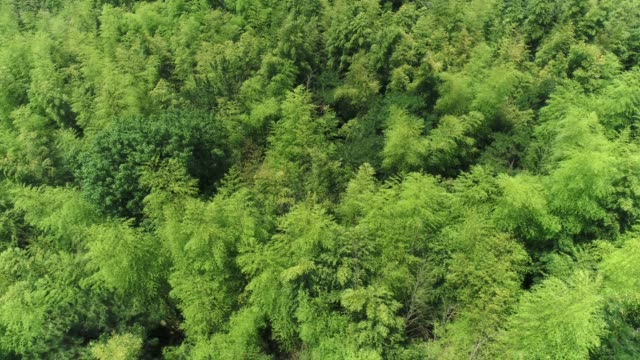 aerial view of the juknokwon (bamboo grove in damyang, south korea) - damyang stock videos & royalty-free footage