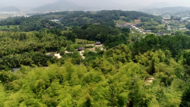 aerial view of the juknokwon (bamboo grove in damyang, south korea) - bamboo plant stock videos and b-roll footage