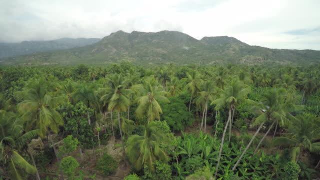 stockvideo's en b-roll-footage met aerial view of the jungle - haïti