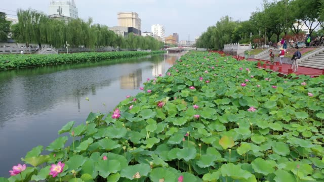 aerial view of the moat of xuchang city filled with lotus on june 18, 2020 in xuchang, henan province of china. - 堀点の映像素材/bロール