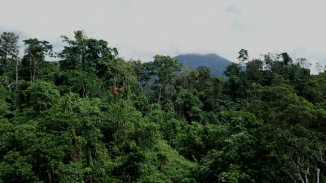aerial view of the papua new guinea rainforest - rainforest stock videos & royalty-free footage