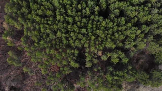 vidéos et rushes de vue aérienne de la forêt de pins - lévitation