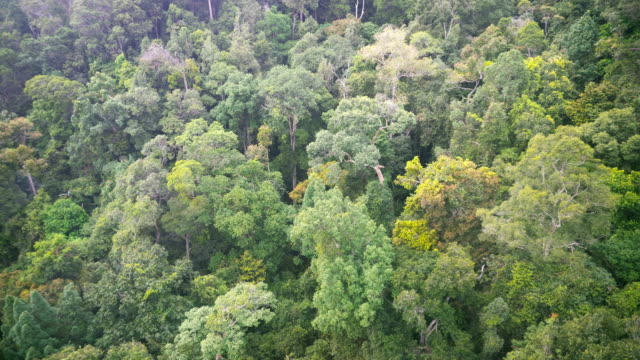 aerial view of the rainforest. moving above tree tops - thick stock videos & royalty-free footage