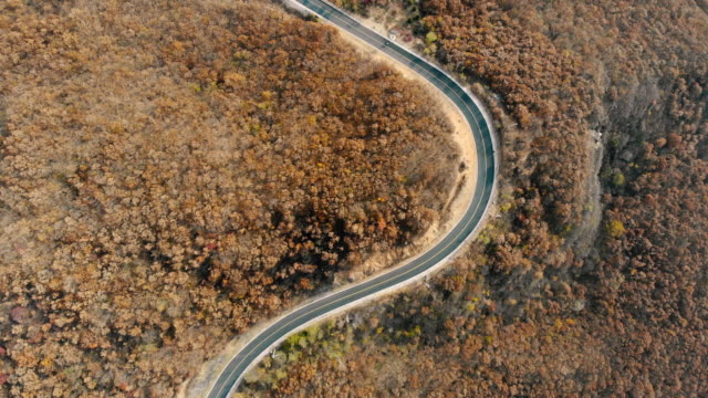 aerial view of the stunning road between forest with autumn colors - directly above stock videos & royalty-free footage