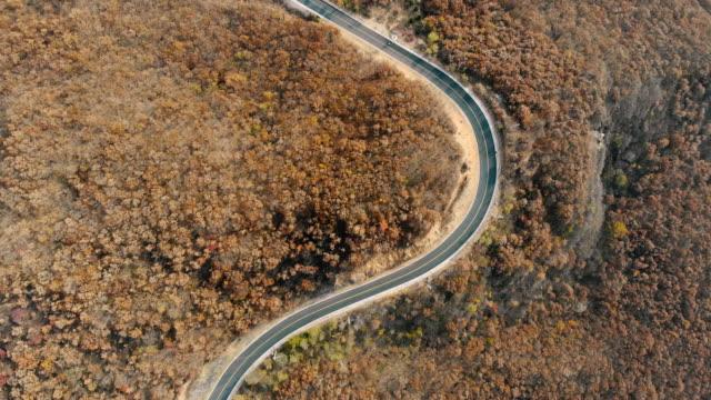 stockvideo's en b-roll-footage met luchtfoto van de prachtige weg tussen bos met herfst kleuren - boven
