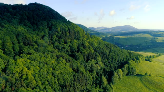 Aerial view of the summer forest